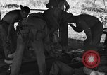 Image of Nadzab casualties Marilanin New Guinea, 1943, second 7 stock footage video 65675044792