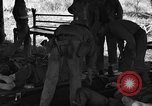 Image of Nadzab casualties Marilanin New Guinea, 1943, second 12 stock footage video 65675044792