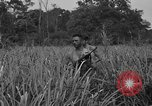Image of Allied paratroopers Nadzab New Guinea, 1943, second 4 stock footage video 65675044793
