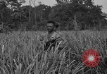 Image of Allied paratroopers Nadzab New Guinea, 1943, second 5 stock footage video 65675044793