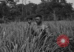 Image of Allied paratroopers Nadzab New Guinea, 1943, second 6 stock footage video 65675044793