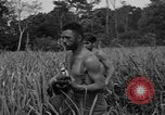 Image of Allied paratroopers Nadzab New Guinea, 1943, second 8 stock footage video 65675044793
