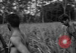 Image of Allied paratroopers Nadzab New Guinea, 1943, second 11 stock footage video 65675044793