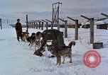 Image of dog sled team Alaska USA, 1960, second 5 stock footage video 65675045190
