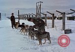 Image of dog sled team Alaska USA, 1960, second 6 stock footage video 65675045190