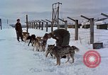 Image of dog sled team Alaska USA, 1960, second 7 stock footage video 65675045190