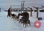 Image of dog sled team Alaska USA, 1960, second 8 stock footage video 65675045190