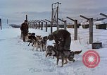 Image of dog sled team Alaska USA, 1960, second 9 stock footage video 65675045190