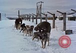Image of dog sled team Alaska USA, 1960, second 10 stock footage video 65675045190