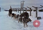 Image of dog sled team Alaska USA, 1960, second 11 stock footage video 65675045190