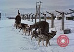 Image of dog sled team Alaska USA, 1960, second 12 stock footage video 65675045190