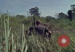 Image of United States1st Cavalry Division Vietnam, 1965, second 6 stock footage video 65675045322