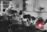 Image of German Shepherd pups Germany, 1952, second 8 stock footage video 65675045417