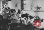 Image of German Shepherd pups Germany, 1952, second 9 stock footage video 65675045417