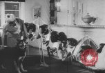 Image of German Shepherd pups Germany, 1952, second 10 stock footage video 65675045417