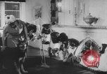Image of German Shepherd pups Germany, 1952, second 11 stock footage video 65675045417