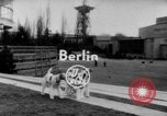 Image of International dog show Berlin Germany, 1954, second 1 stock footage video 65675045472