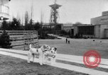 Image of International dog show Berlin Germany, 1954, second 5 stock footage video 65675045472