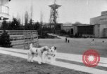 Image of International dog show Berlin Germany, 1954, second 6 stock footage video 65675045472