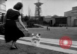 Image of International dog show Berlin Germany, 1954, second 12 stock footage video 65675045472