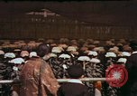 Image of Chrysanthemum show Tokyo Japan, 1937, second 11 stock footage video 65675045639