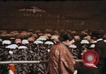 Image of Chrysanthemum show Tokyo Japan, 1937, second 12 stock footage video 65675045639