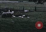 Image of War time pork beef and sugar production in America United States USA, 1942, second 3 stock footage video 65675045650