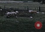 Image of War time pork beef and sugar production in America United States USA, 1942, second 6 stock footage video 65675045650