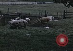 Image of War time pork beef and sugar production in America United States USA, 1942, second 7 stock footage video 65675045650