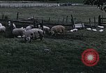 Image of War time pork beef and sugar production in America United States USA, 1942, second 10 stock footage video 65675045650
