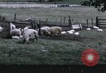 Image of War time pork beef and sugar production in America United States USA, 1942, second 11 stock footage video 65675045650