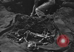 Image of Palawan Massacre victims recovered Palawan Philippines, 1945, second 10 stock footage video 65675045829