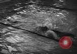 Image of swimming meet Zurich Switzerland, 1943, second 12 stock footage video 65675045835