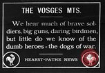 Image of dogs of war Vosges France, 1917, second 1 stock footage video 65675045966
