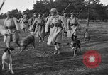 Image of dogs of war Vosges France, 1917, second 6 stock footage video 65675045966