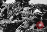 Image of dogs of war Vosges France, 1917, second 9 stock footage video 65675045966
