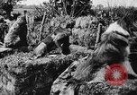 Image of dogs of war Vosges France, 1917, second 10 stock footage video 65675045966