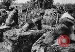 Image of dogs of war Vosges France, 1917, second 11 stock footage video 65675045966