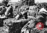 Image of dogs of war Vosges France, 1917, second 12 stock footage video 65675045966