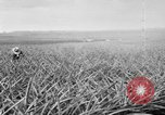 Image of plantation Hawaii USA, 1917, second 4 stock footage video 65675046041