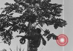Image of plantation Hawaii USA, 1917, second 3 stock footage video 65675046042