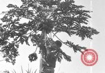 Image of plantation Hawaii USA, 1917, second 4 stock footage video 65675046042