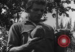Image of plantation Hawaii USA, 1917, second 6 stock footage video 65675046042