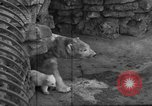 Image of polar bear cub Milwaukee Wisconsin USA, 1934, second 2 stock footage video 65675046052