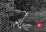 Image of polar bear cub Milwaukee Wisconsin USA, 1934, second 4 stock footage video 65675046052