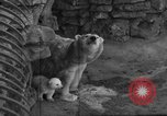 Image of polar bear cub Milwaukee Wisconsin USA, 1934, second 5 stock footage video 65675046052