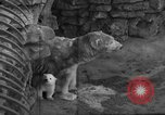 Image of polar bear cub Milwaukee Wisconsin USA, 1934, second 7 stock footage video 65675046052