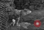 Image of polar bear cub Milwaukee Wisconsin USA, 1934, second 8 stock footage video 65675046052
