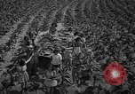 Image of National Tobacco festival 1940 South Boston Virginia USA, 1940, second 8 stock footage video 65675046153