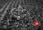 Image of National Tobacco festival 1940 South Boston Virginia USA, 1940, second 9 stock footage video 65675046153